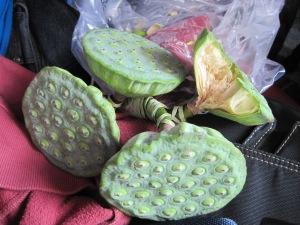 Penampakan biji lotus